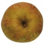 Finkenwerder Herbstprinz, Apfel, oben