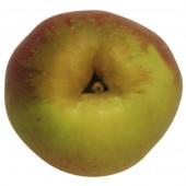 Rheinischer Krummstiel, Apfelbaum Apfel oben