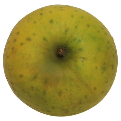 Ananasrenette, Apfel Hochstamm, oben
