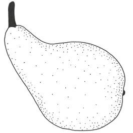 Frühe aus Trevoux Birnbaum Hochstamm, Birne seite