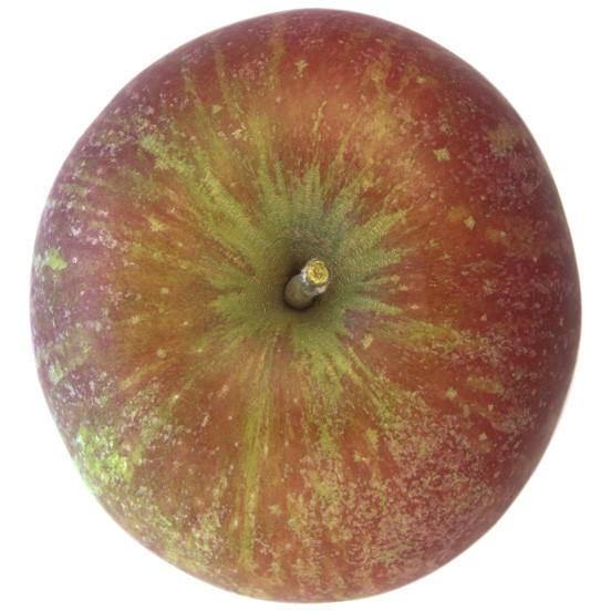 Breaburn, Apfel Busch oben
