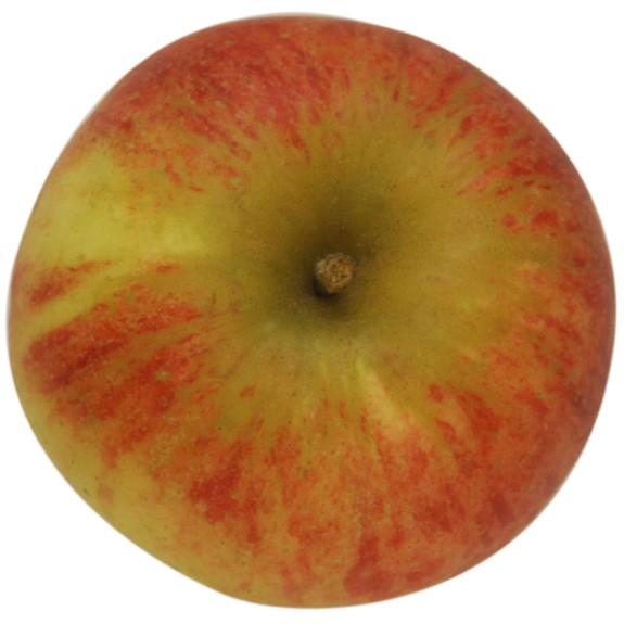 Elstar, Apfel Busch