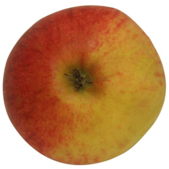 Elstar, Apfel Halbstamm