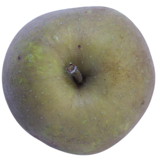 Grüner Boskoop, Apfel Busch, oben