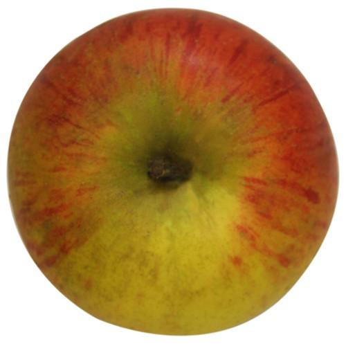 Goldparmäne, Apfel, oben