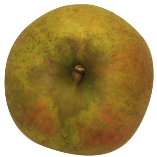 Goldrenette von Blenheim, Apfel, oben