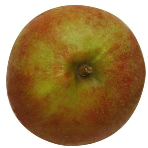 Holsteiner Cox, Apfel, oben