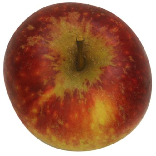 Ingrid Marie, Apfel, oben
