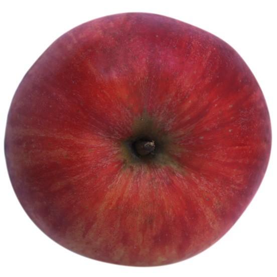 James Grieve, Apfel Halbstamm, oben