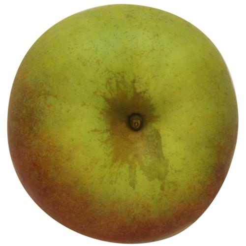 Krügers Dickstiel, Apfel oben