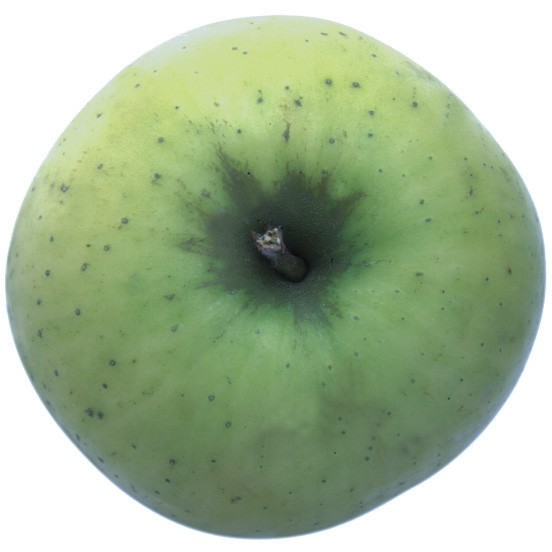 Landsberger Renette, Apfel Halbstamm, oben