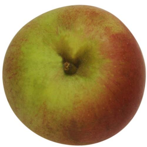 Laxtons Superb, Apfel unten
