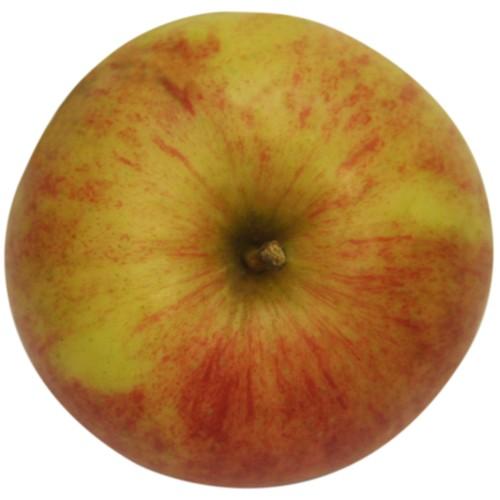 Melrose, Apfel oben