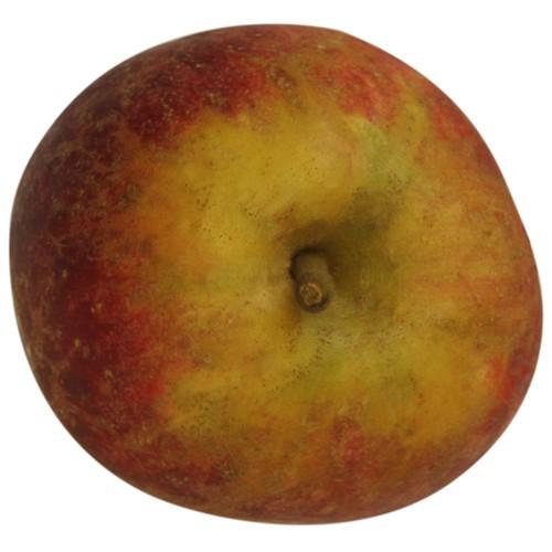Purpurroter Cousinot, Apfel oben