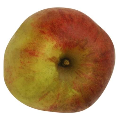 Roter Bellefleur, Apfel oben