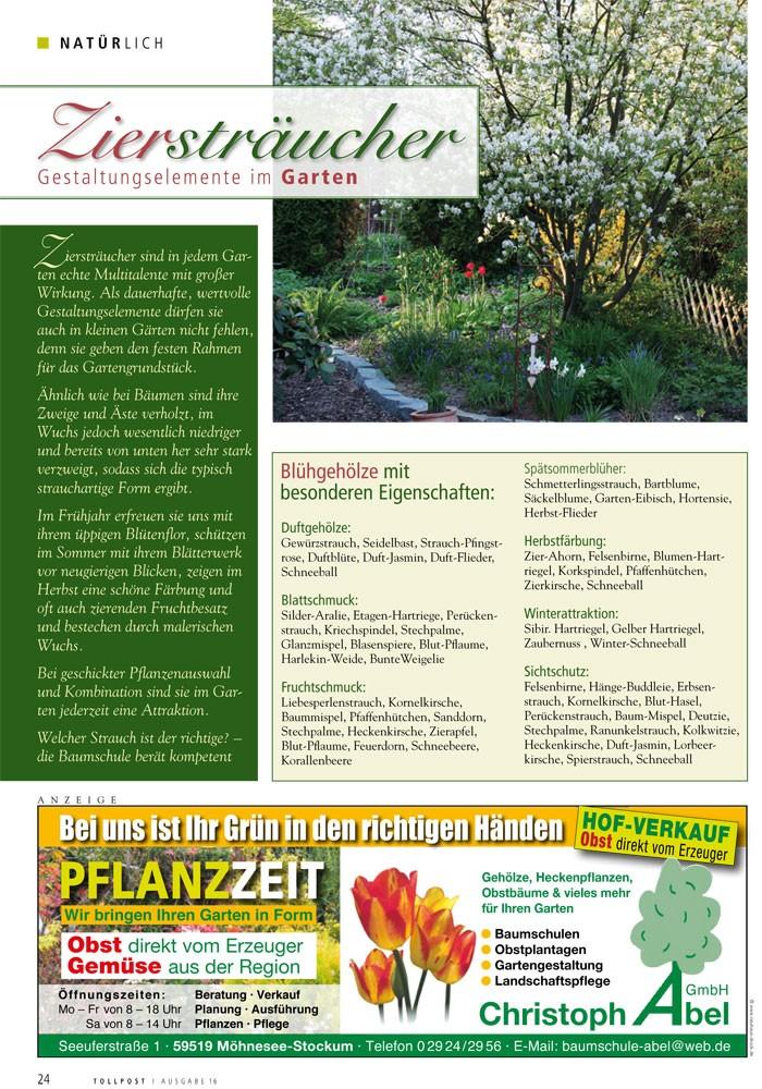 Ziersträucher: Gestaltungselemente im Garten