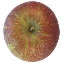 Braeburn, Apfel Busch
