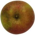 Schöner von Boskoop, Apfel Busch