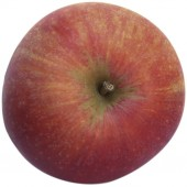 Alkmene, Apfelbaum Hochstamm oben