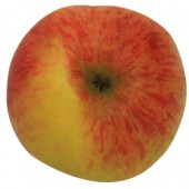 Baumanns Renette, Apfel Busch oben