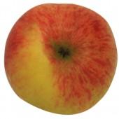 Luxemburger Renette, Apfel Hochstamm oben