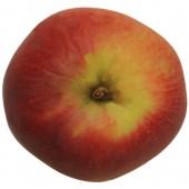 Berner Rosenapfel, Apfelbaum Halbstamm, oben