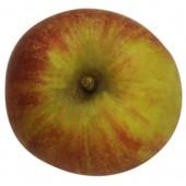 Cox Orange rot, Apfel, oben