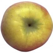 Ecolette, Apfel Hochstamm oben