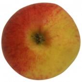 Elstar, Apfel Hochstamm