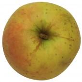Gelber Bellefleur, Apfel, oben