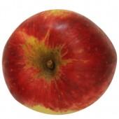 Jakob Fischer, Apfelbaum, Apfel oben
