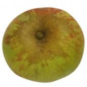 Jakob Lebel, Apfelbaum Apfel, oben