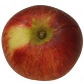 Kardinal Bea, Apfel, oben