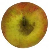 Pilot, Apfel oben