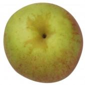Rheinischer Bohnapfel, Apfelbaum Apfel oben