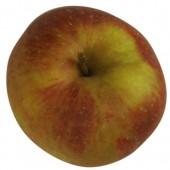 Boskoop rot, Apfelbaum Hochstamm, Apfel oben