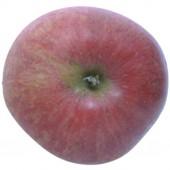 Roter Berlepsch, Apfelbaum Hochstamm, Apfel oben