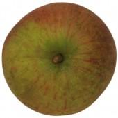 Rubinette, Apfelbaum, Apfel oben