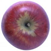 Rubinola Apfelbaum Hochstamm, Apfel oben