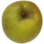 Schöner aus Wiedenbrück, Apfel oben