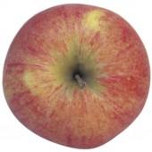 Shampion, Apfel oben