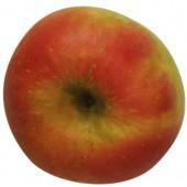 Glockenapfel, Apfelbaum Hochstamm, Apfel oben