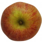 Westfaelischer Gülderling, Apfelbaum, Apfel oben